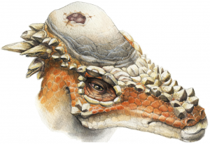 1280px-Pachycephalosaurus