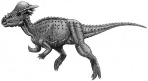 Pachycephalosauria_jmallon