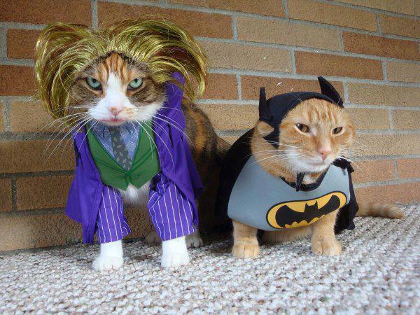 BatCat + Joker