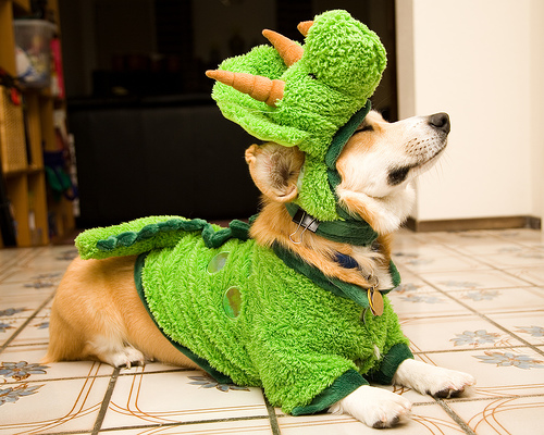 dog is either salad or dino