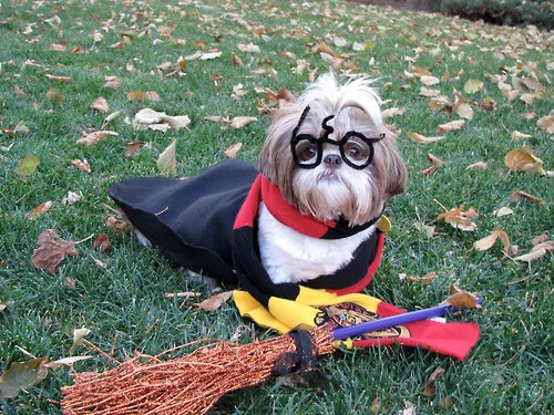doggypotter
