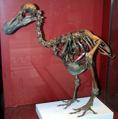 dodo bones