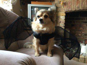 Chloe sitting
