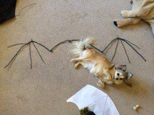 Chloe tummy rub bat wings