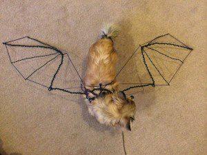 Chloe wondering why wings upside down