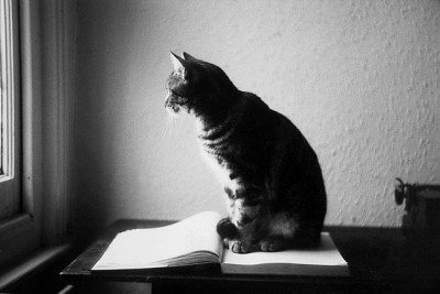 cat on book